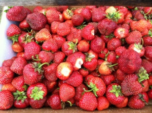 Our Strawberries from the Berry Patch...YUMMY!!
