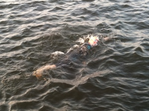 My husband was able to take pictures of me swimming as I neared the swim exit.
