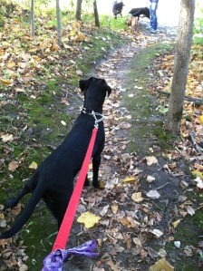 Basil looking ahead on the trail