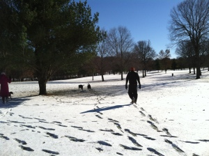 A beautiful winter day to take the dogs for a walk.