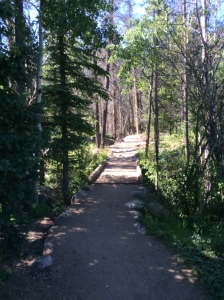 On the trail to Adam's Falls in Rocky Mountain National Park.