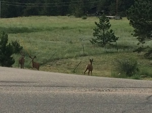 Deer on the side of the road along my running route.