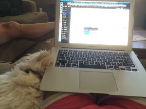 Sophie is cuddled up next to me as I write.