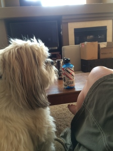 Getting some advice from Sophie (my cousin's dog)...she thinks I have a lot of characteristics of professional athletes.