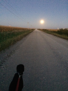 Basil walking toward the Supermoon on a rural gravel road.