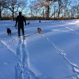Snowshoeing is the perfect offseason cross training activity! The dogs love it too!