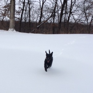 Basil loves playing in the snow!! #happyheart