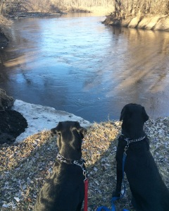 Lots of dreaming of spring swims on our walk Tuesday!